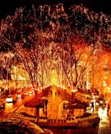 定禅寺通のケヤキ並木が宝石のように光輝く