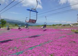 2016 茶臼山高原「芝桜まつり」