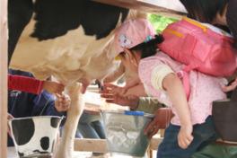 無料で参加できる乳搾り教室