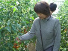 みんなみの里 フルーツトマト摘み