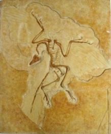 テーマ展「化石-生き物のあゆみ-」