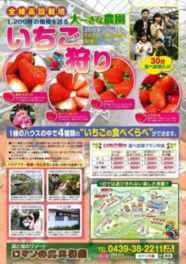 4種類の苺の食べ比べができる「いちご狩り」