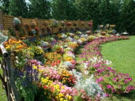 花風景 ハナックと花ロード