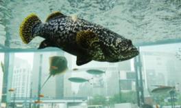 ソニービルを沖縄美ら海の魚たちが泳ぎ回る