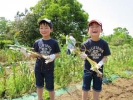 大分農業文化公園 ニンニク&ジャガイモの収穫体験