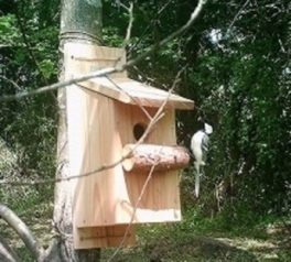 バードウォッチング&巣箱作り