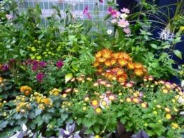 チューリップ四季彩館常設展「季節のフラワーガーデン」晩秋の庭~七五三~