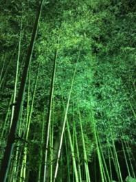 嵯峨嵐山七夕まつり