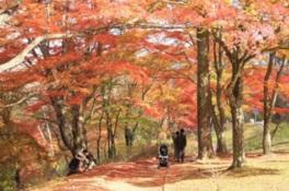 山中湖「夕焼けの渚・紅葉祭り」