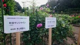 町田薬師池公園四季彩の杜 ダリア園 ダリアに名前をつけよう