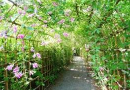 向島百花園「萩まつり」