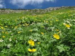 「天空の花畑」南アルプス