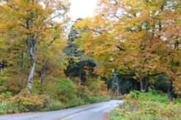 原生林に囲まれ、ケーブルカーから景色も楽しめる