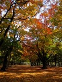 園内を散歩しながら色鮮やかな紅葉が楽しめる