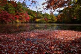 六甲の自然を紹介する森林展示館