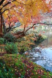第17回 成田山公園紅葉まつり