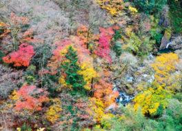 山水画のような美しい紅葉が楽しめる