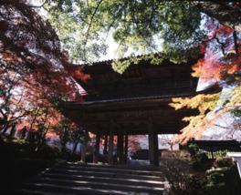山門の周りも美しく色付いた木々が多くある