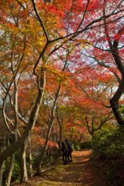【紅葉・見頃】白野江植物公園