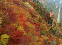 御在所岳中腹の紅葉は10月下旬から11月中旬が見頃