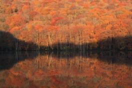 紅葉が朝焼けに照らされ燃えるように真っ赤に染まる