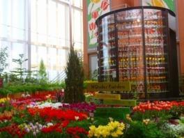 チューリップ四季彩館常設展「季節のフラワーガーデン」早春の庭~ホワイトデー~