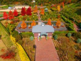 深山イギリス庭園はイチョウ、フウ、ジュンベリーなどが鮮やかに色付く