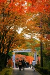 見事な紅葉が楽しめる横川地域