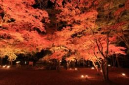 月の石もみじ公園 紅葉ライトアップ