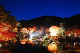 修善寺虹の郷「もみじライトアップ」