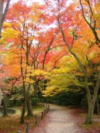 なからぎの池周辺の紅葉は必見