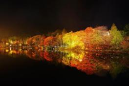 秋の茶臼山高原まつり