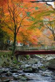 渓流沿いにもみじ橋を望む紅葉