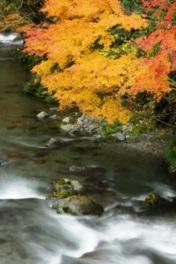 心奪われるほど美しい紅葉と清流