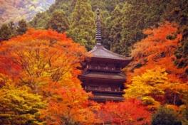 多宝塔の周囲を鮮やかに彩る紅葉