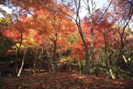 白滝付近や尾根の散策を楽しみながら紅葉狩りを堪能できる