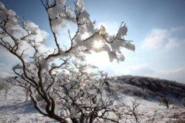 三峰山霧氷まつり