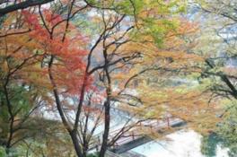 竜田川紅葉祭り
