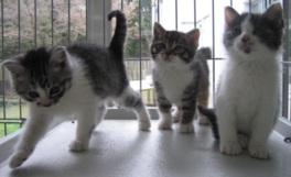 命を救われ、元気いっぱいの保護猫たち