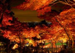 筑波山ケーブルカーもみじライトアップ夜間運行