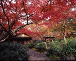 日本庭園茶室の「汎庵・万里庵」はこの時期だけ特別公開される