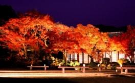 11月20日(月)から11月26日(日)は、秋の洋らん展も開催