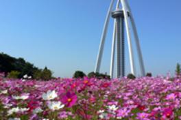 138タワーパーク オータムフェスタ