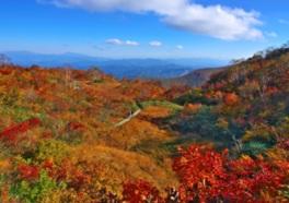 自然遊歩道からは鮮やかに染まる山々を見られる