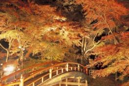 河鹿橋紅葉のライトアップ