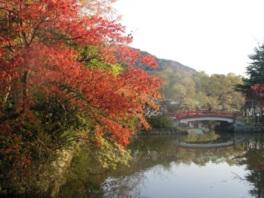 柳原神池の紅葉