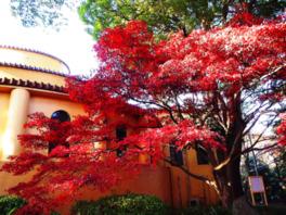 旧多摩聖蹟記念館前の紅葉