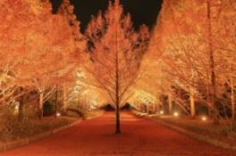 神戸市立森林植物園 紅葉のライトアップ「森を彩る光の饗宴」