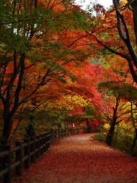 神戸市立森林植物園 森林もみじ散策