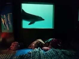 ヤックス自然学校「親子で夜の鴨川シーワールド探検」(1月:パパさんDay)